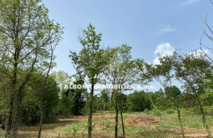 thumb_2294372_an-kuca-teren-zemljiste-gradevinsko-istra-immobilien--1-.jpg