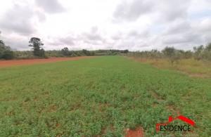 thumb_2400915_odnjan--poljoprivredno-zemljiste--agencija-residence--1-.jpg